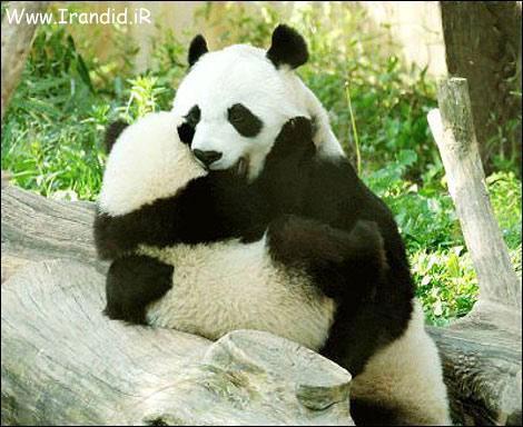 عکس های love از حیوانات Www.Irandid.iR